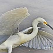 Egret Grace At The Beach Poster
