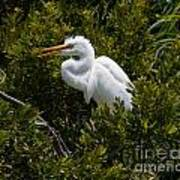 Egret In Bushes Poster