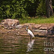 Egret In Central Park Poster