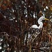 Egret In Hiding Poster