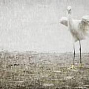 Egret In Rain Poster