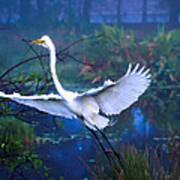 Egret In The Mist Poster
