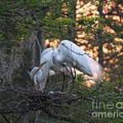 Egrets At Nest Poster