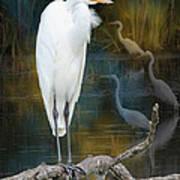 Egrets Poster by John Kunze