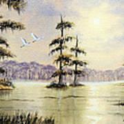 Egrets Over Wakulla Springs Poster
