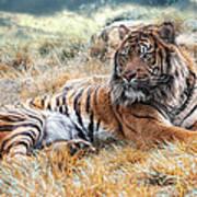 El Tigre Poster