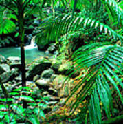 El Yunque Palm Trees And Waterfall Poster