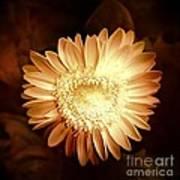 Elegant Flower Poster
