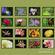 Elegant Flowers Collection Poster