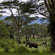 Elephant   #0068 Poster