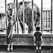 Elephant I Poster