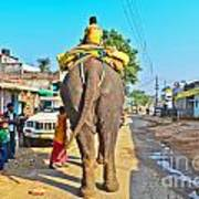 Elephant Ride In Street Poster
