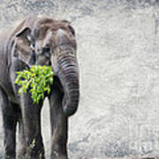 Elephant With A Snack Poster