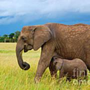 Elephants In Masai Mara Poster
