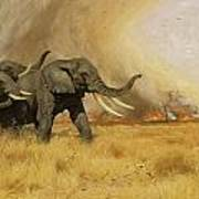 Elephants Moving Before A Fire Poster