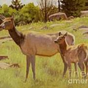 Elk And Calf Poster