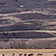 Elk Herd Below Sheep Mnt - 15x110 Poster