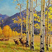 Elk Herd In Aspen Grove Poster