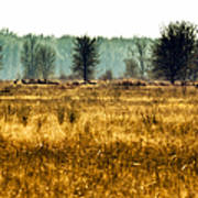 Elk In The Distance No. 1 Poster