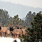 Elk In The Snowing Open Poster