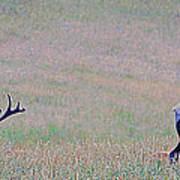 Elk On The Plains 1 Poster