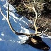 Elk Preservation. Poster