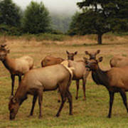 Elks Lodge Poster