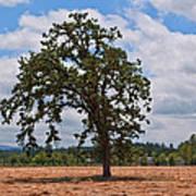 Elm Tree In Hay Field Art Prints Poster
