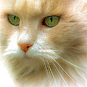 Emerald Eyes Poster