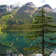 Emerald Lake Reflection And Pine Tree In Yoho National Park-british Columbia-canada Poster