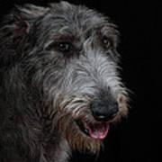 Irish Wolfhound II Poster