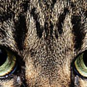 Emmy Eyes Poster