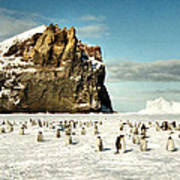 Emperor Penguin Colony Cape Washington Antarctica Poster