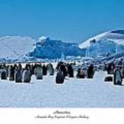 Emperor Penguin Rookery Poster by David Barringhaus