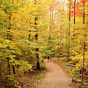 Empty Trail Runs Through Tall Trees Poster