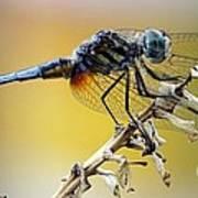 Enchanting Dragonfly Poster