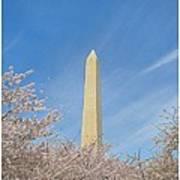 Enchanting Spring In Washington Poster