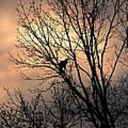 End Of The Day  Red Tailed Hawk Poster