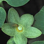 Endangered Flora Poster