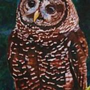 Endangered - Spotted Owl Poster
