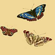 English Butterflies Poster
