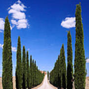 Entrance To Villa Tuscany - Italy Poster
