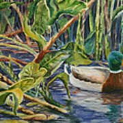 Environmentally Sound - Mallard Duck Poster