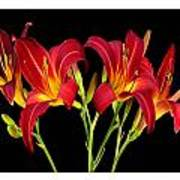 Erotic Red Flower Selection Romantic Lovely Valentine's Day Print Poster