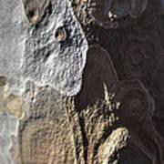 Eucalyptus Bark Abstract Poster