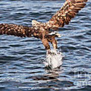 European Fishing Sea Eagle 2 Poster
