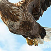 European Flying Sea Eagle 2 Poster