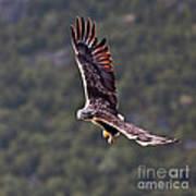 European Flying Sea Eagle 4 Poster