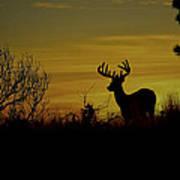 Evening Buck Poster