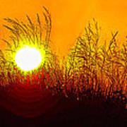 Evening Dunes Poster